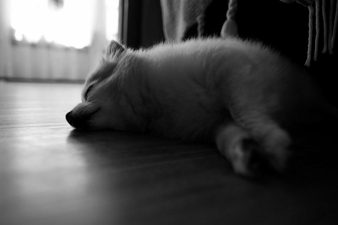 SleepyPuppy
