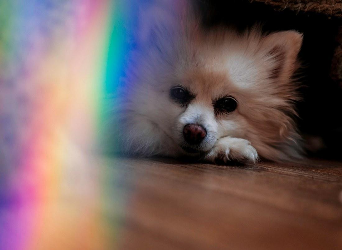 Rainbowcleo4