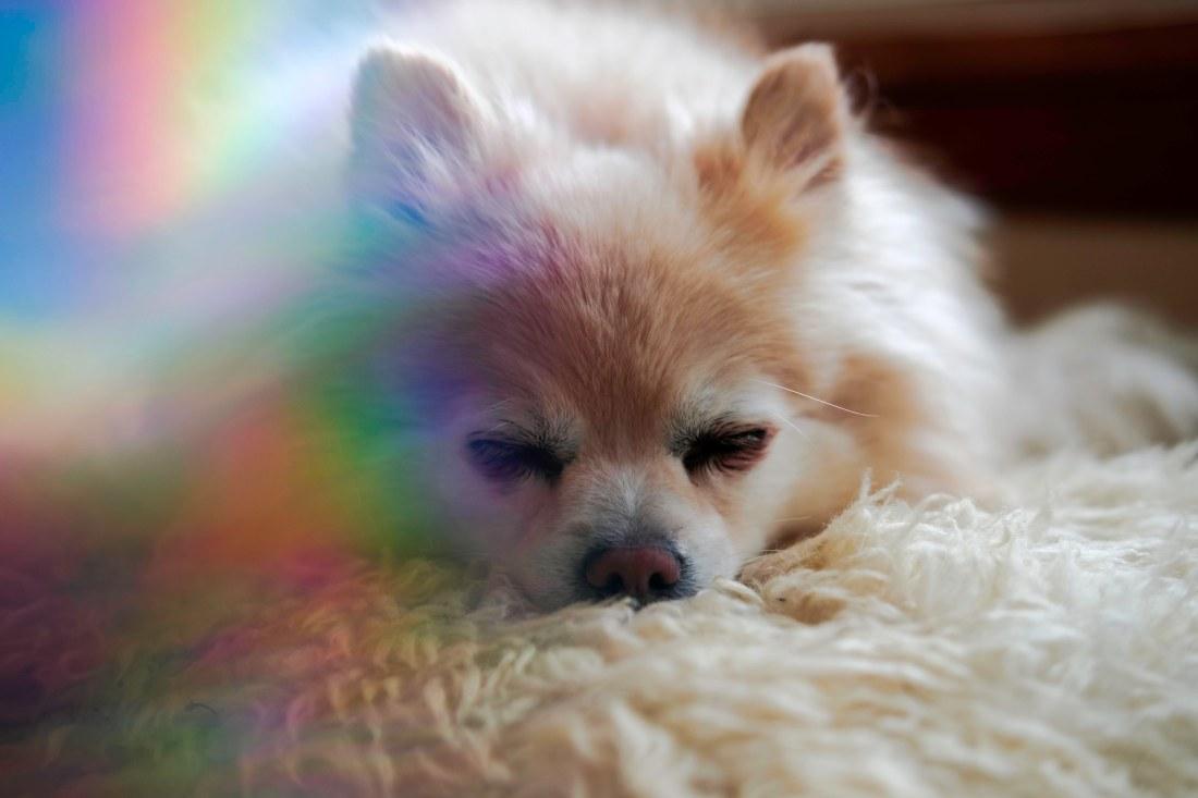 Rainbowpumpkin4